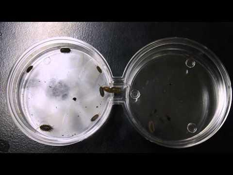 bio lab pill bug