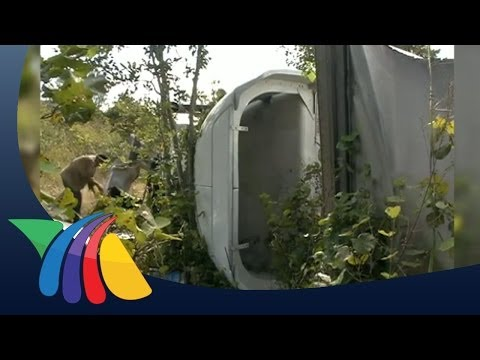 Rapi�a De Leche Tras Choque En Campeche