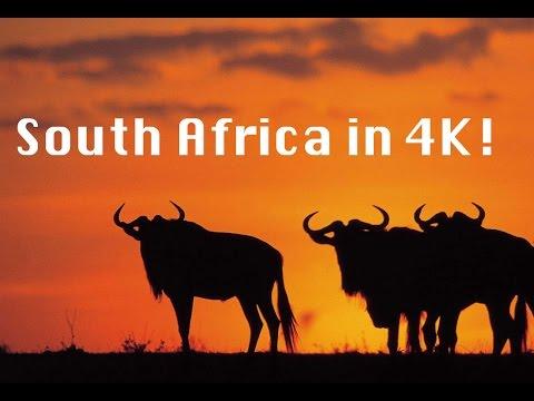 South Africa Safari in 4K!
