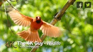 The 4K Guy: Wildlife Video Compilation - Ontario, Canada
