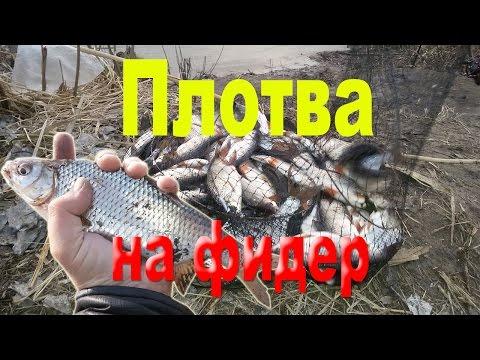 весенняя рыбалка на плотву фидером