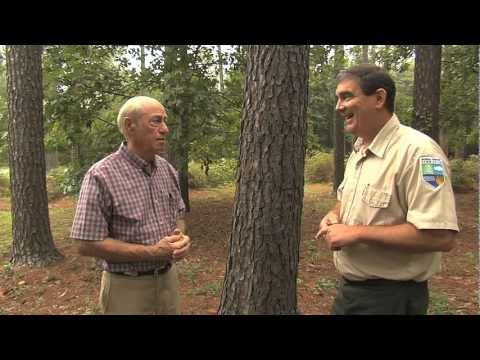 Conservation Programs Help Preserve Forest Land, Create Green Space