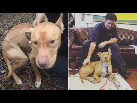 Pit Bull Puppy Saved From Alleged 'Crack House' Becomes Loved Firehouse Mascot
