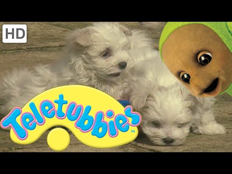 Teletubbies: Puppies - Full Episode video