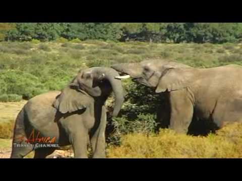 Amazing African Nature Scenes and Animals - Africa Travel Channel