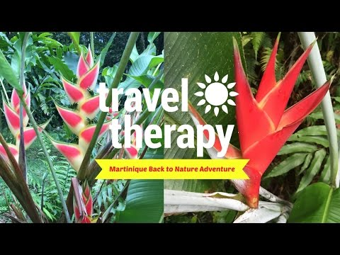 Unique Nature Adventure in Martinique | TRAVEL THERAPY