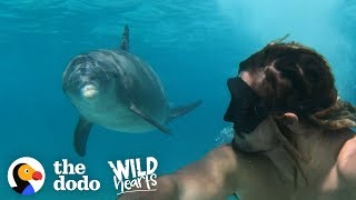 Dolphin Loves To Play With Every Person And Dog He Sees | The Dodo Wild Hearts