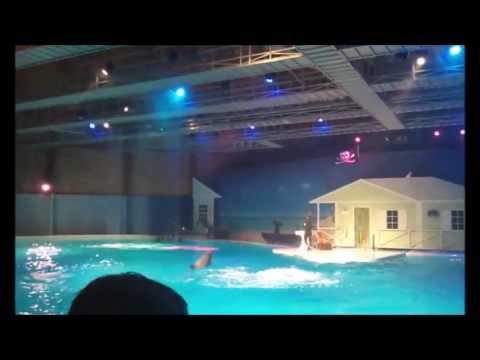 Dolphin Show at Kolmården