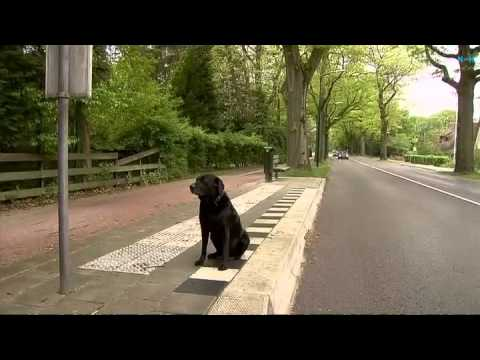 Hond ontvlucht gooise villa