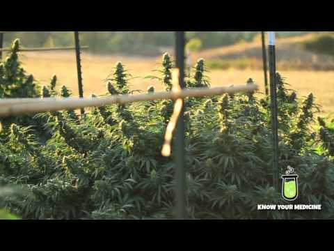What is CBN?  Cannabinoid Profile: Cannabinol