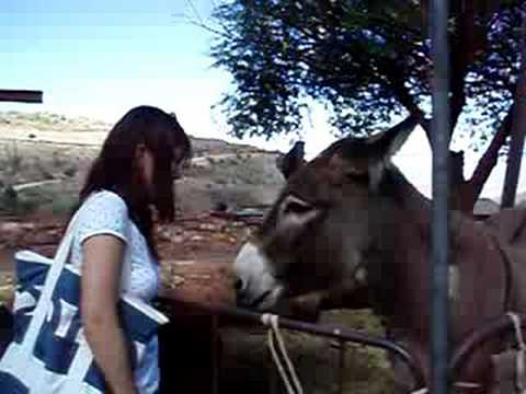 The Donkey Kiss