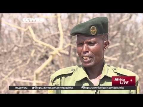 Kenya's community conservancy celebrate black rhino birth