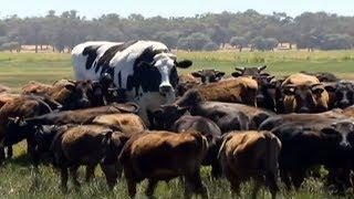 10 इतने बड़े जानवर नहीं देखे होंगे | 10 ABNORMALLY LARGE ANIMALS THAT ACTUALLY EXIST
