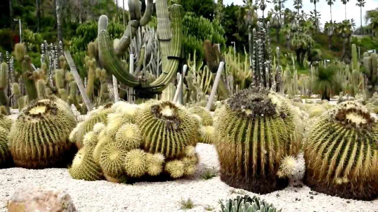 the barcelona cactus garden jardins de moss n costa i
