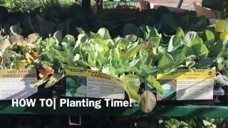 HOW TO| Gardening for Dummies Part 3 Planting Time!