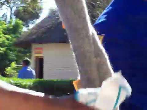 Carreras de avestruces.  Oudtshoorn.  Sudáfrica