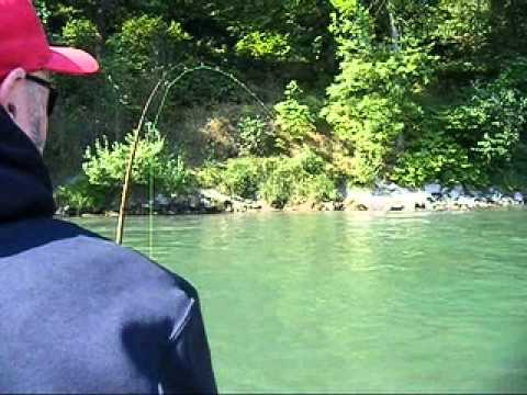 Big King Salmon on the Cowlitz River 2011
