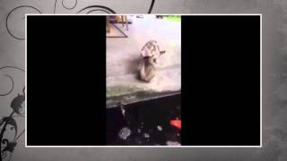 Best Funny Animal 2015 - Fish attacked