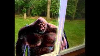 The Sasquatch Savant Theory 1: Top 10 Parallels with Autism