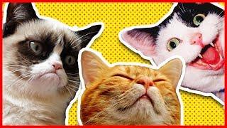 ㋡ [GATTI PAZZI #3 NARCOLESSIA FELINA] ㋡ Video Gatti | Compilation Gatti | Video Divertenti