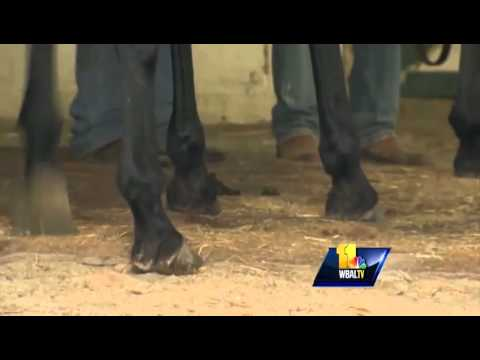 Md. horse breeders: Business is finally coming back