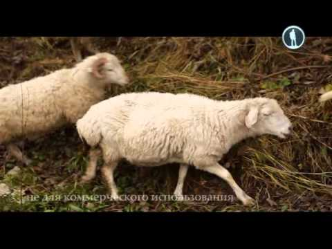 Видео об Ингушетии и ингушах