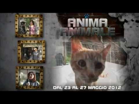Promo per la 6ª puntata del format ANIMA ANIMALE – Tancri Produzioni Video