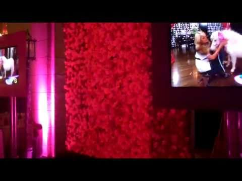 Paris Hilton's dancing wall of flowers
