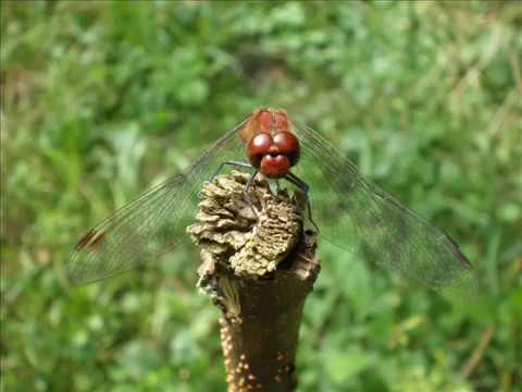 Piękno Polskiej Przyrody (The Beauty Of Plish Nature)