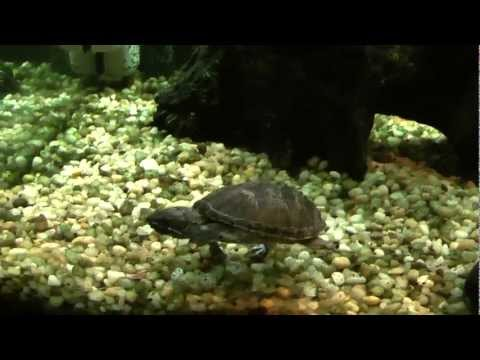 Turtle Tank DIY Basking Platform - HOW TO Build a Turtle Topper