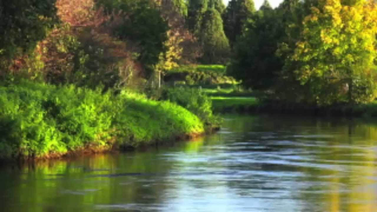 Nature Sounds for Relaxing: Birdsong - YouTube Relaxing Nature Sounds