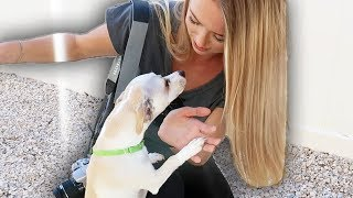 HUGE ANIMAL RESCUE SURPRISE!