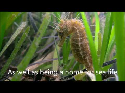 Seagrass video sequence August 2016