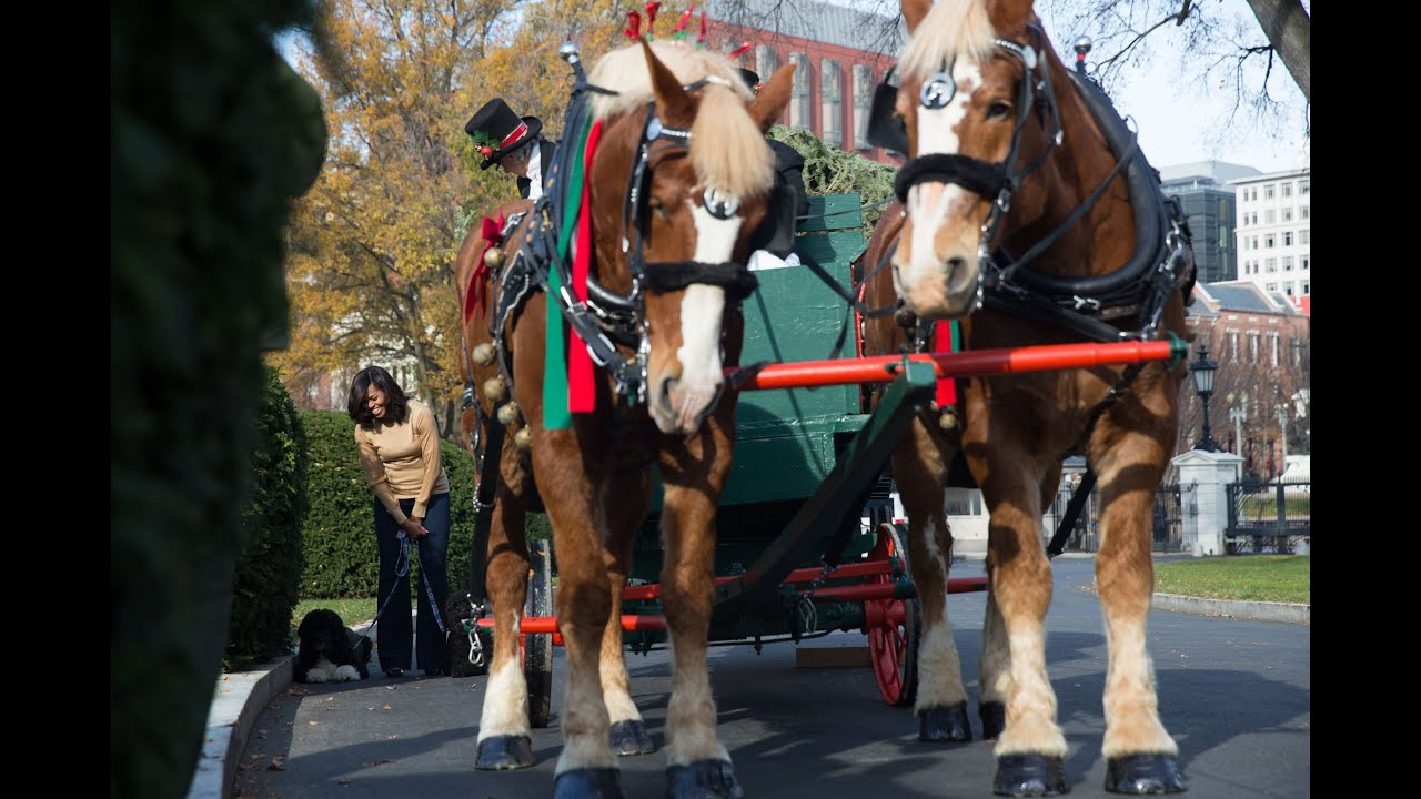 The 2015 White House Christmas Tree Arrival