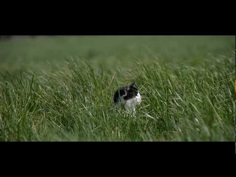 Nikon D800 video sample (Slow Motion)