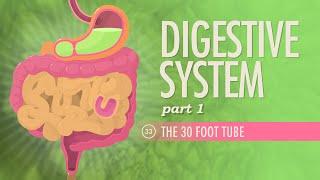 Digestive System, Part 1: Crash Course A&P #33