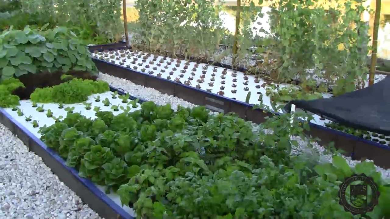 Introduction To The Aes Aquaponics System Youtube