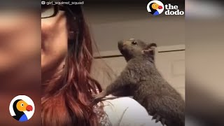Squirrels Who Lost Mom Get A Brand-New Family | The Dodo