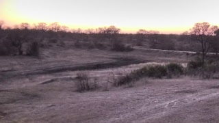 Djuma Private Game Reserve Live Stream