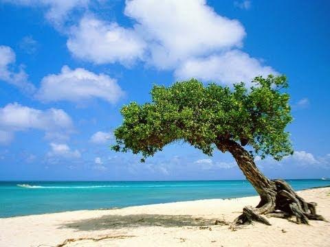 Aruba caribbean travel