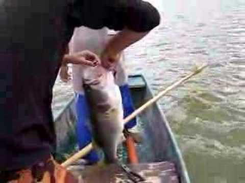 Bass Fishing Colombia - Parte 1