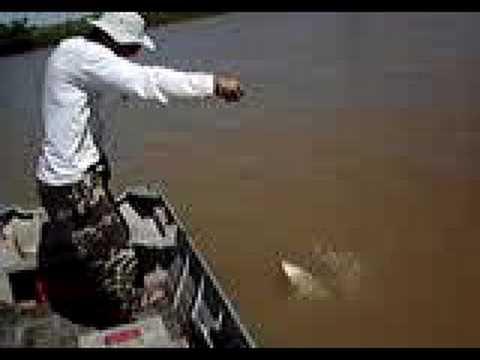 Pesca de Dourados no Rio São Francisco 4
