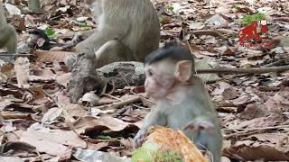 What mom monkey do?,why mom monkey do like this? Real life of baby monkey, Monkey Camp part 608