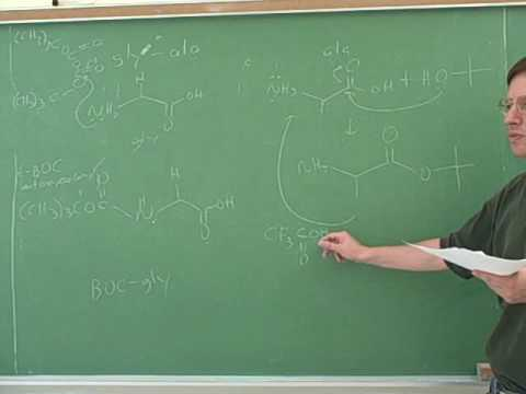 Amino acid and polypeptide synthesis (11)