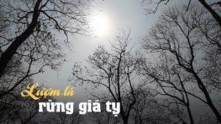 Kỳ lạ những người phụ nữ vào rừng lượm lá kiếm tiền ở Đồng Nai