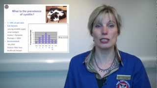 Role of stress in cat cystitis FIC explained by a vet specialist.mov