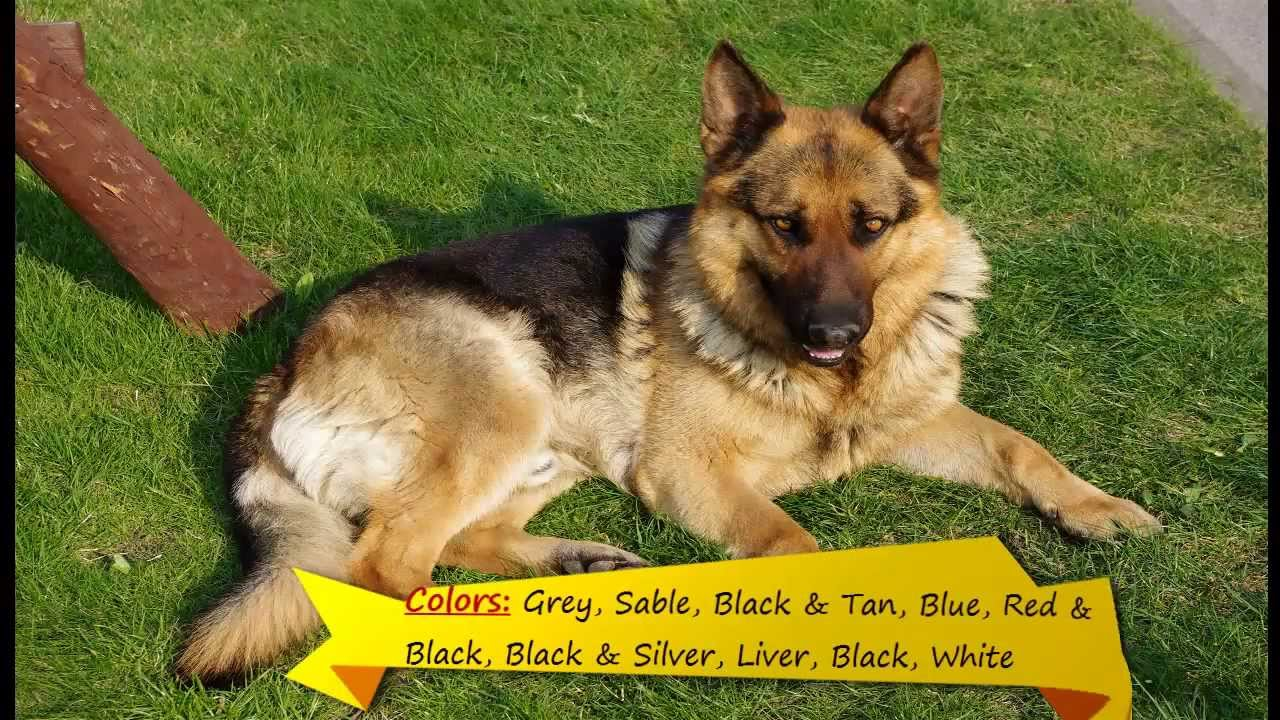 Top Breeds Of Dogs In World