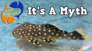 Top 10 Fish Keeping Myths, These Are Lies That Many People Believe