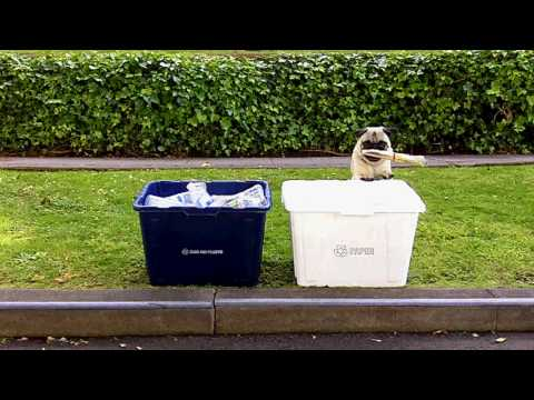GREEN PUG RECYCLES! and changes lightbulb, carpools... Video