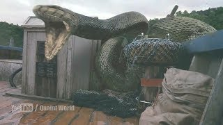 Anaconda Swallowed Andy Anderson Anacondas The Hunt for the Blood Orchid Movie Scene